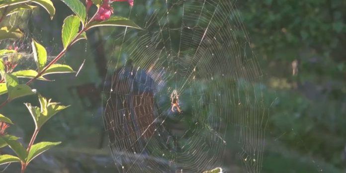 Örümcek Ağlarının Çözülemeyen Gizemi